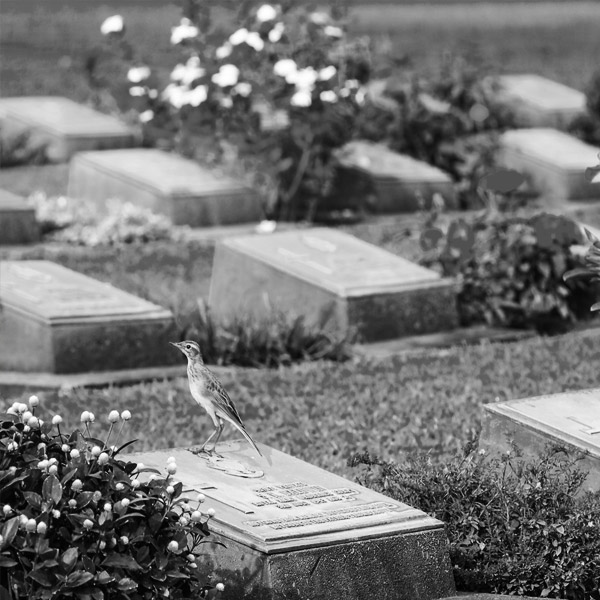 Devon Based Monumental Headstone Amp Memorial Stone Masons